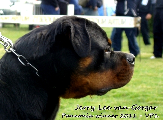 Jerry_Lee_van_Gorgar_1